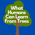 What Humans Can Learn From Trees
